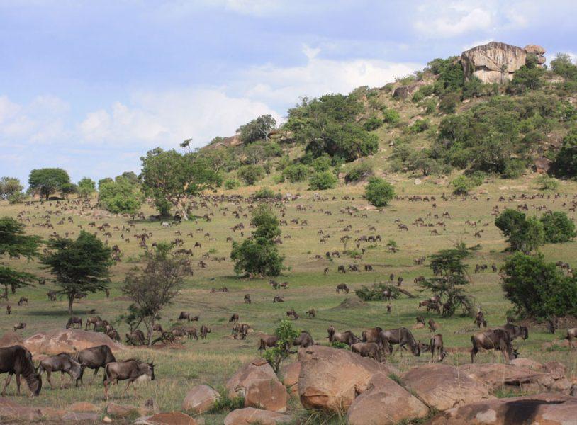 Sameji Safaris tours