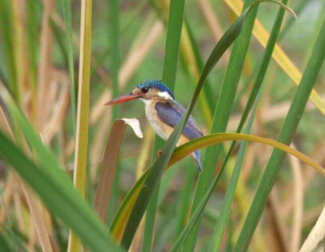 Close up bird Tanzania