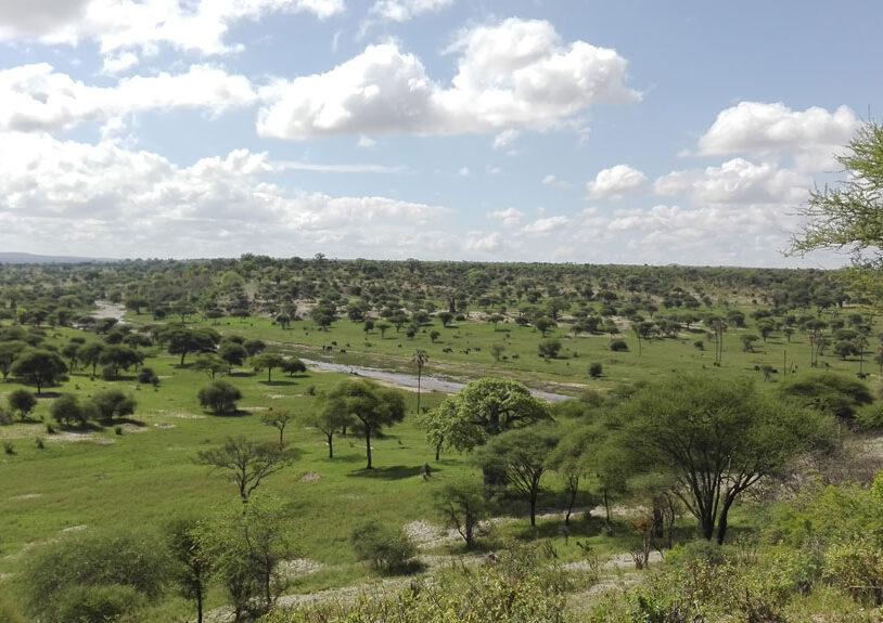 Sameji Safaris